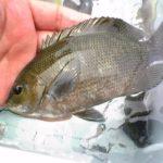 釣り同好会・2009年シーズンの活動報告